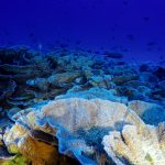 Coral Reefs on the High Seas Coalition launches website