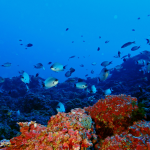 Building Ambition for a new High Seas Treaty – IUCN Webinars